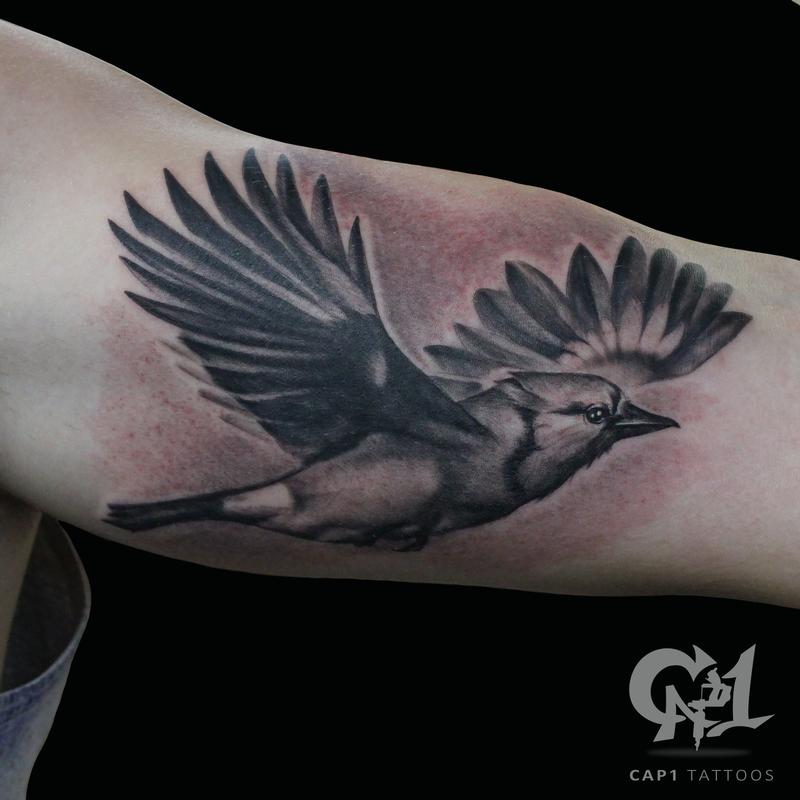 b818fa2659fb6 Cap1 Tattoos : Tattoos : Black and Gray : Flying Blue Jay